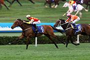 「威爾頓」(1號馬)洒開大步,勝出2015年的花旗銀行香港金盃。