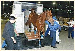 Horsemen S Handbook